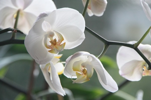 orchid-4780_640